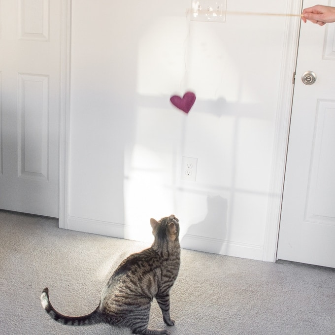 kitty playing with a DIY cat teaser wand