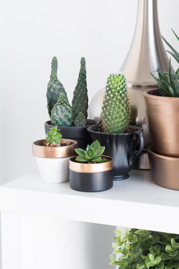 upcycled tea tin planter on a shelf with other succulents