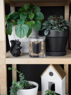 cat treat jar on a shelf with plants