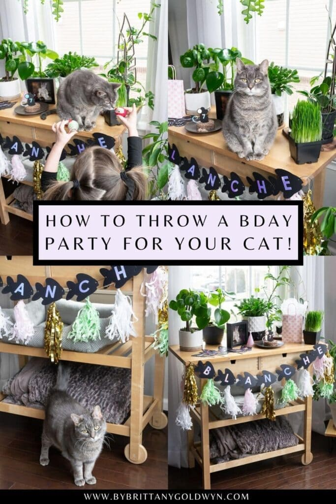 how to throw a birthday party for a cat pinnable graphic with text overlay