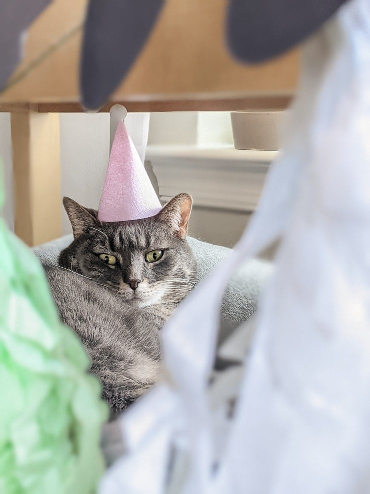 how to make a birthday party hat for a cat