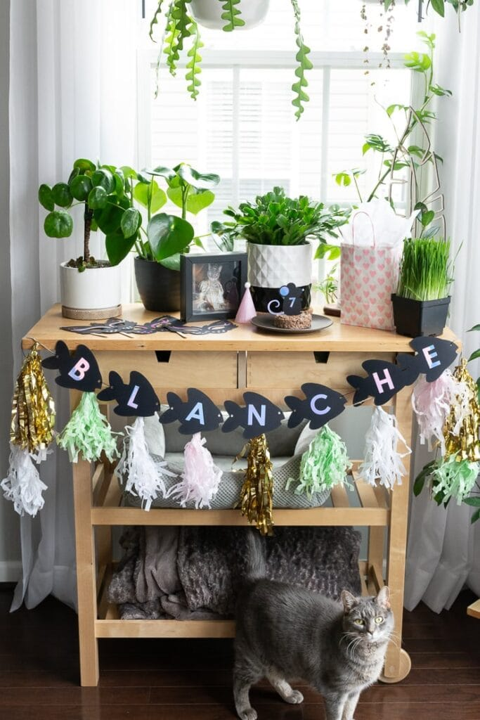 DIY birthday party decor for a cat's birthday