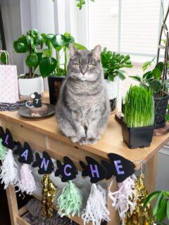 DIY birthday party decor for a cat's birthday
