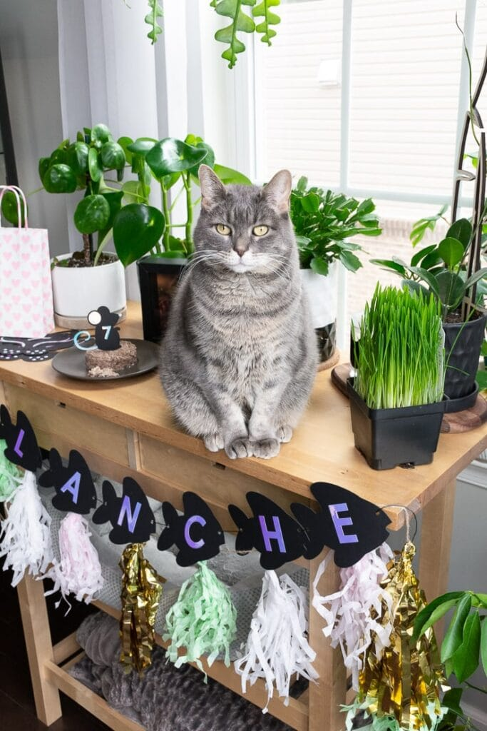cat sitting on a table with plants and birthday decor