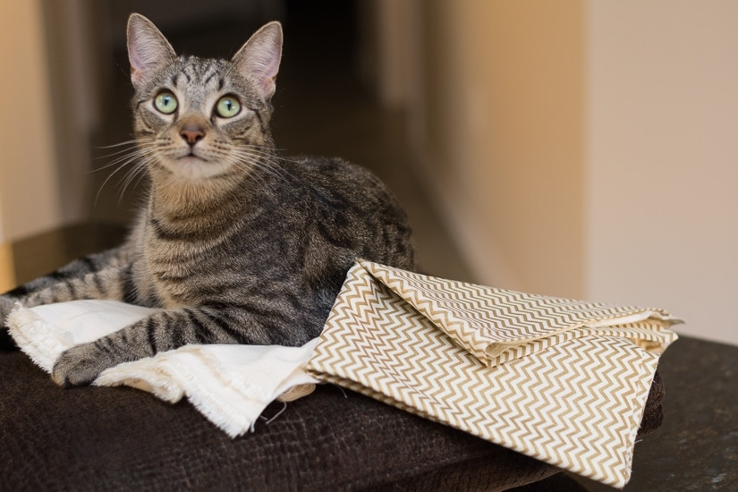 cat sitting on a couch with fabric