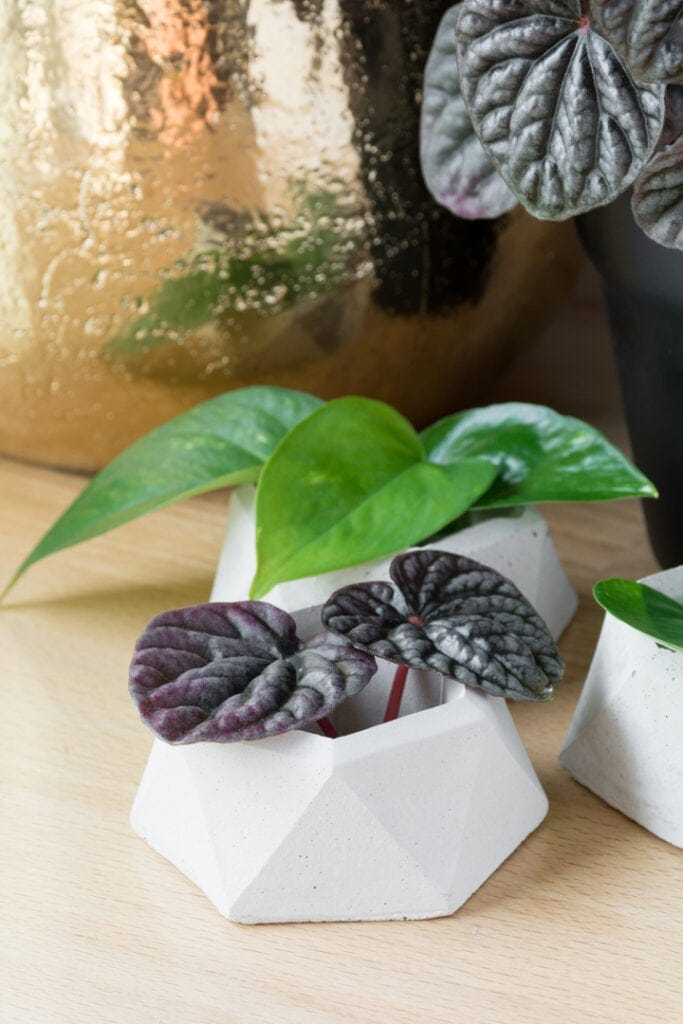 small concrete planters made with a matte silicone mold