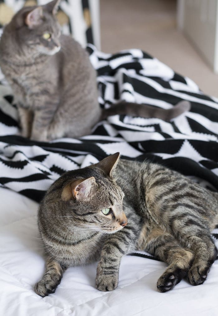 cats laying on a bed