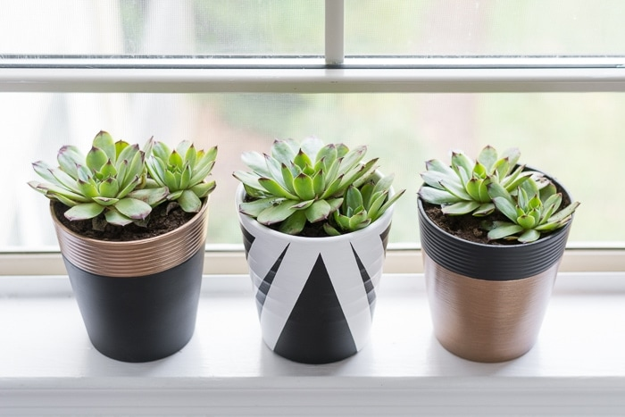 painted thrifted pots on a windowsill with succulents planted in them