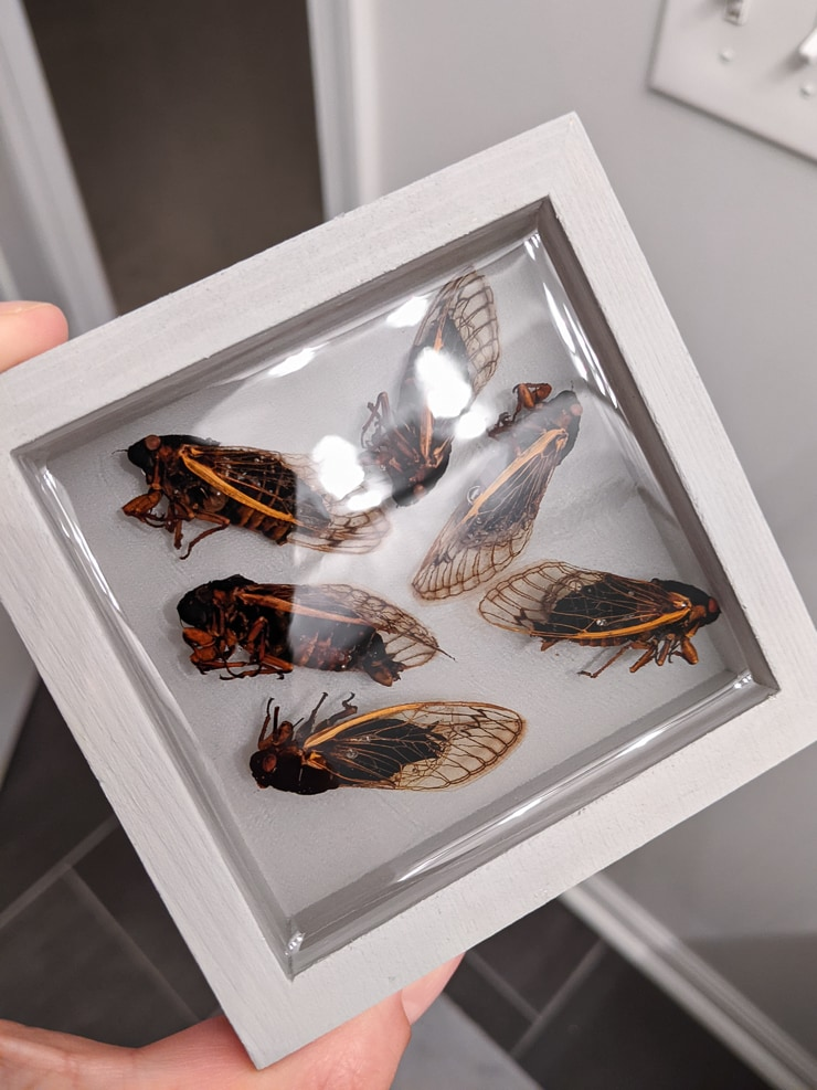 insects preserved in resin