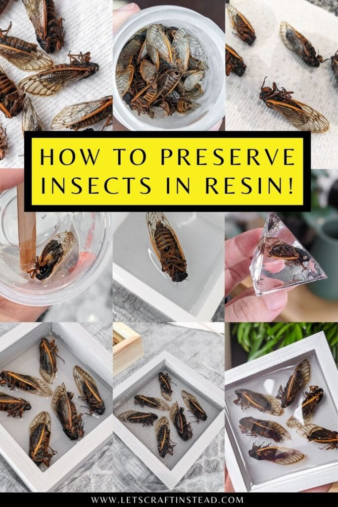 pinnable graphic about how to preserve insects in resin including images and text overlay