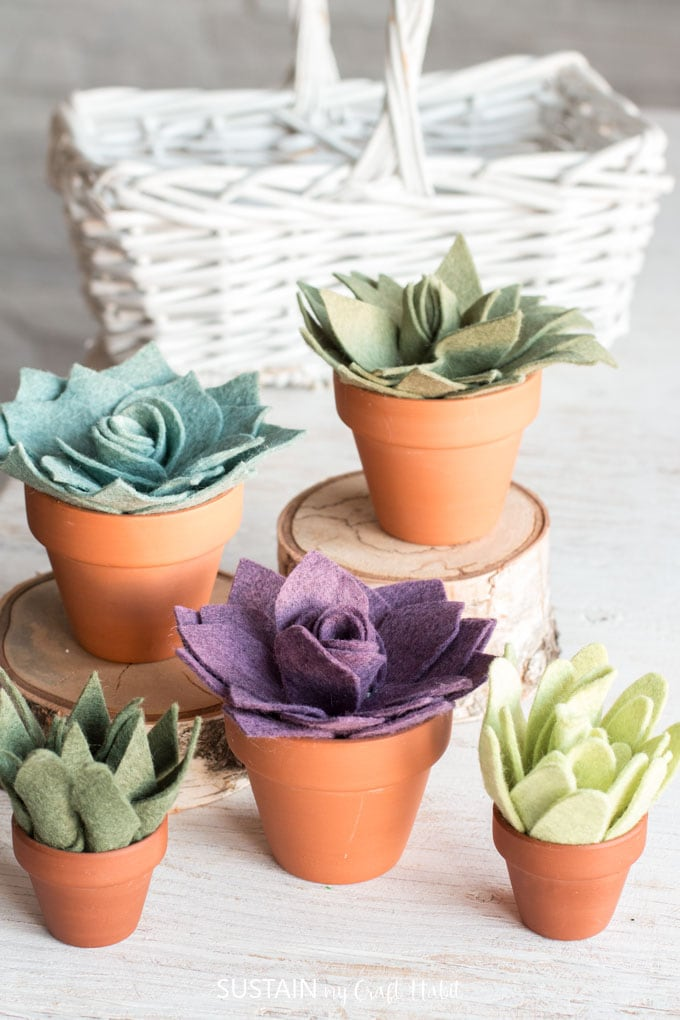 five potted succulents made from felt on a Cricut